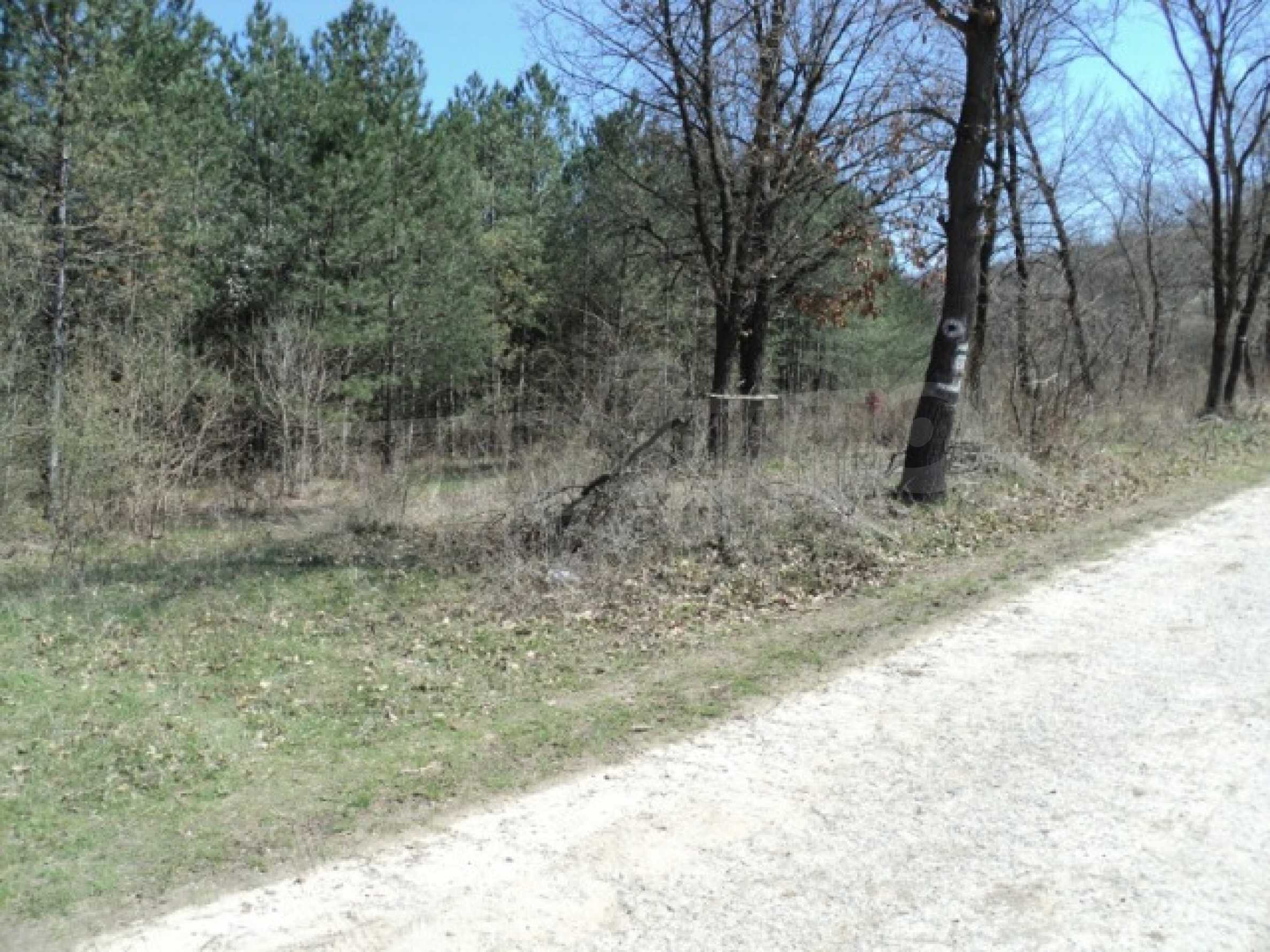 Forest and abonded three plants land for sale  6