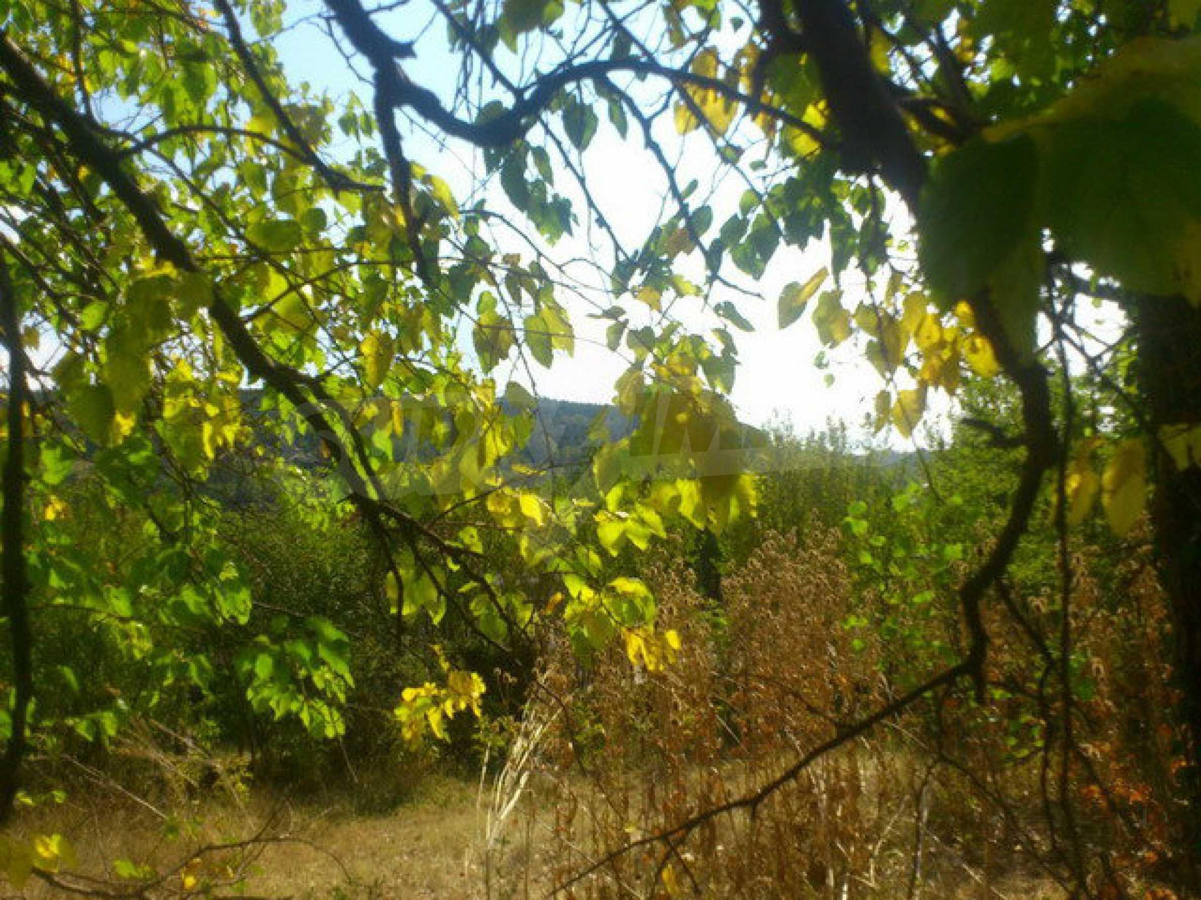 Geregeltes Grundstück in einem Dorf 30 km. von Veliko Tarnovo 1