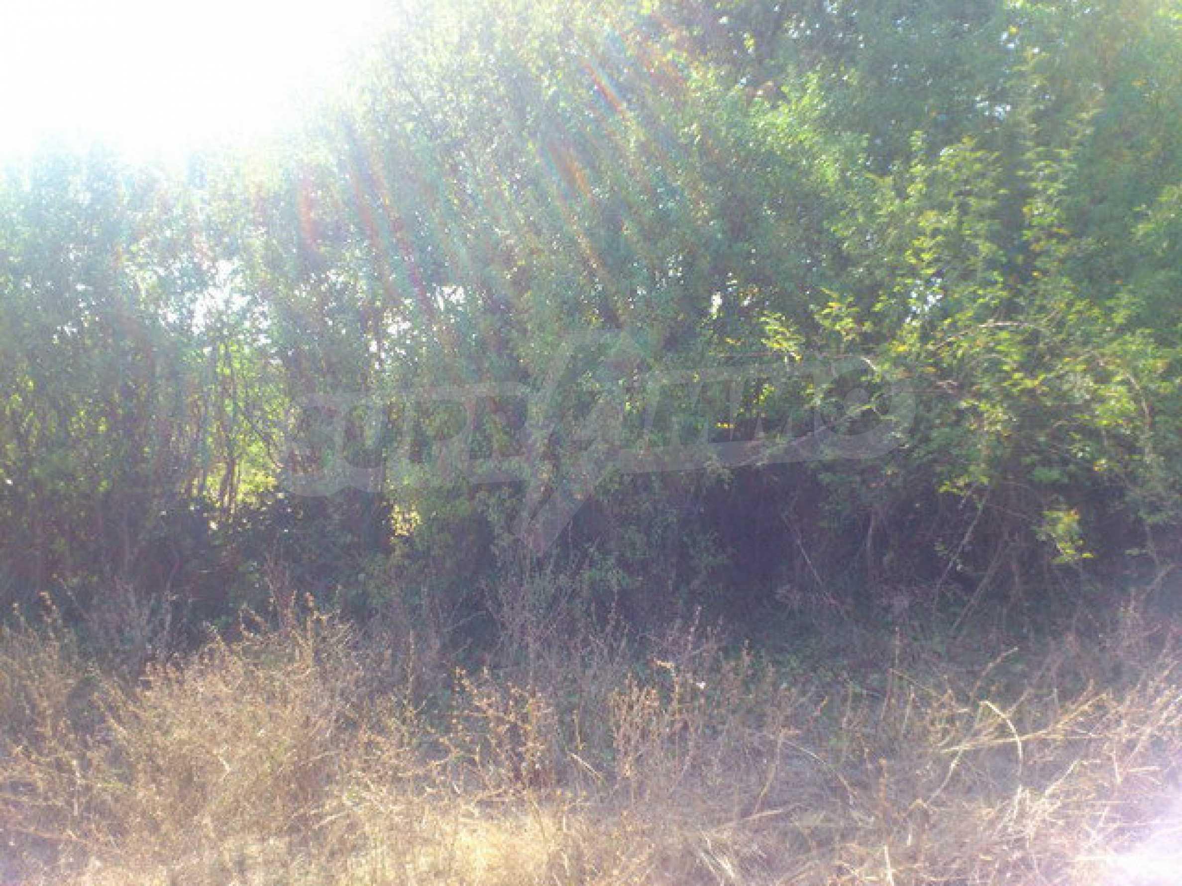 Geregeltes Grundstück in einem Dorf 30 km. von Veliko Tarnovo 5