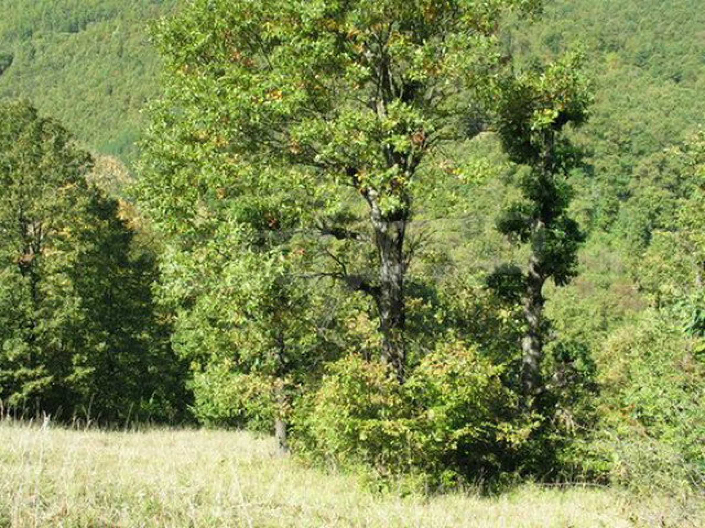 Spacious plot of land in Teteven 34