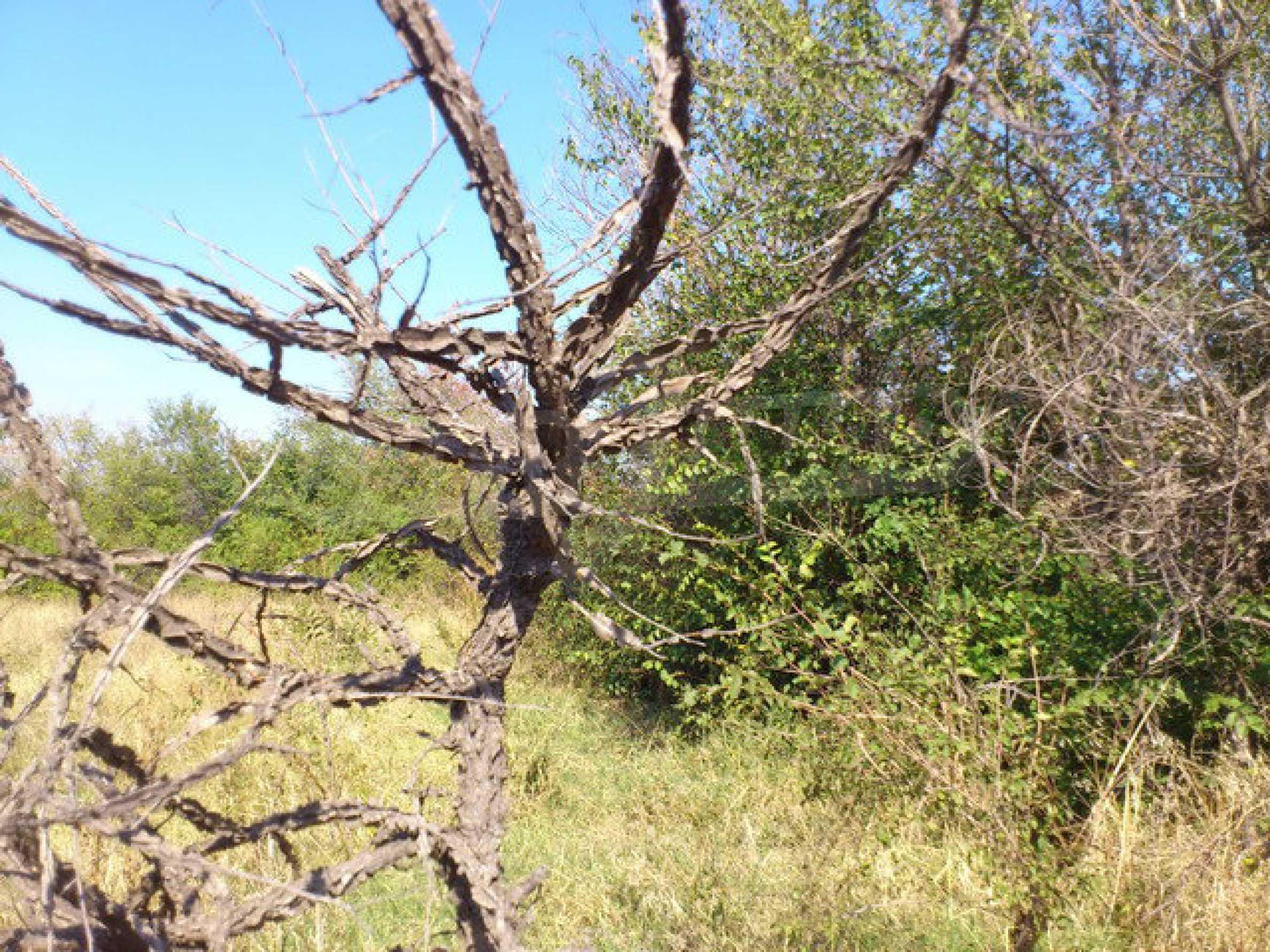 Geregeltes Grundstück mit einem Teil der landwirtschaftlichen Nutzfläche in einem Dorf 9 km. von Veliko Tarnovo 6