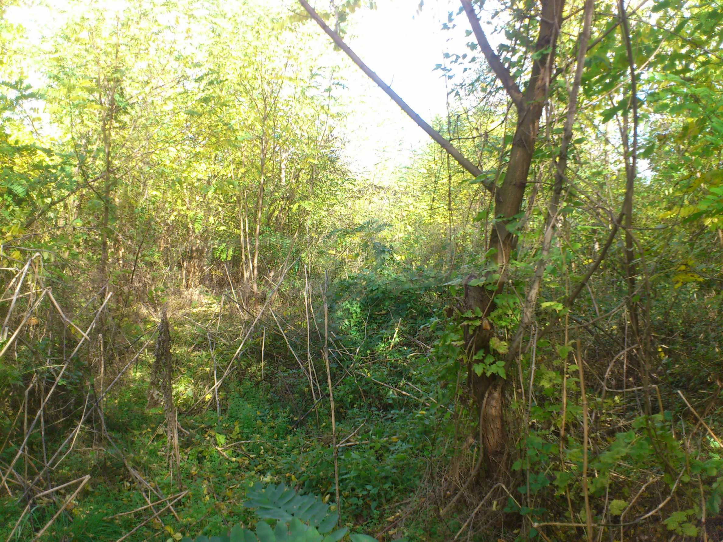 Regulated plot of land in a village just 17 km. from Veliko Tarnovo 9