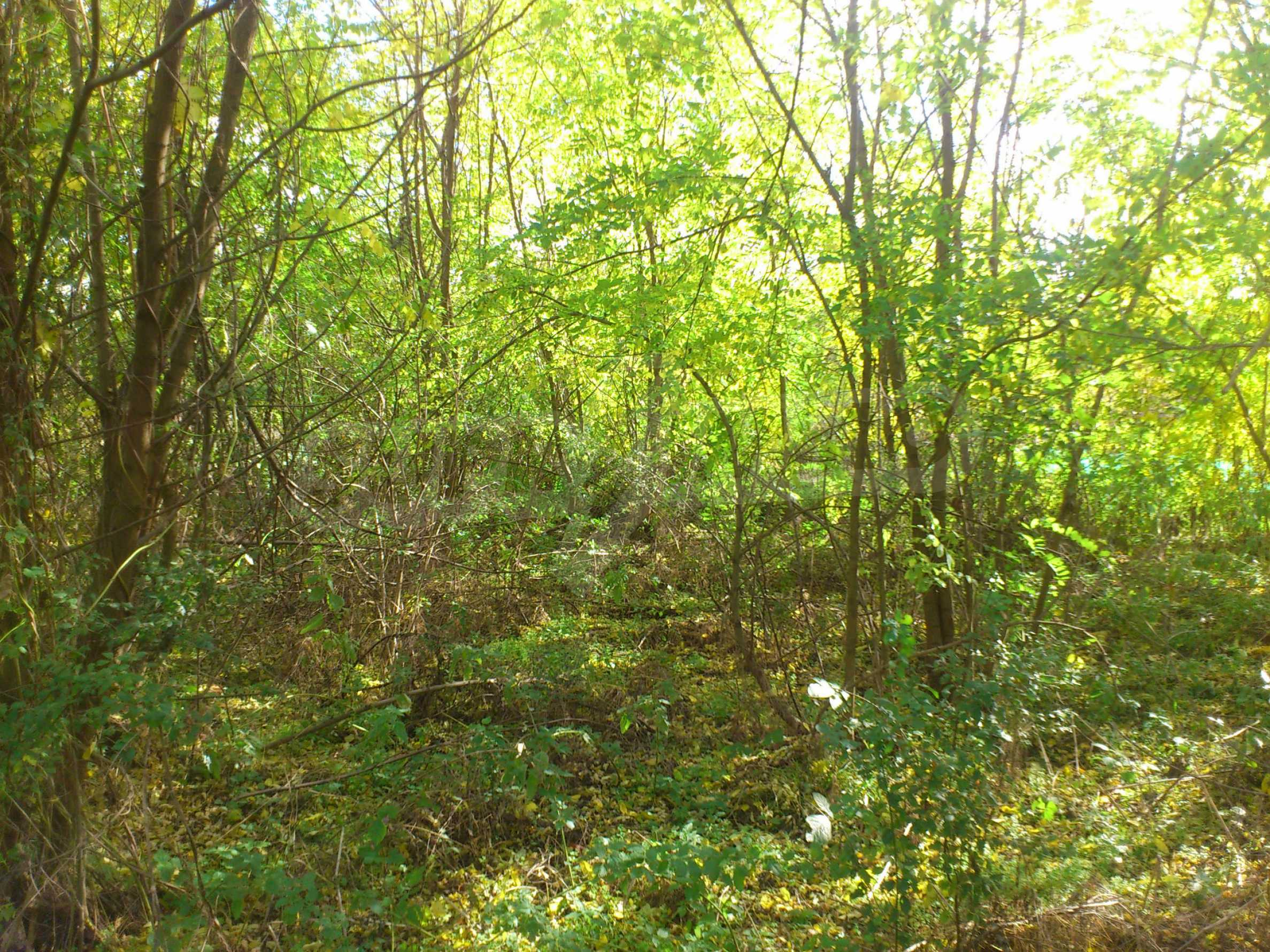 Regulated plot of land in a village just 17 km. from Veliko Tarnovo 8