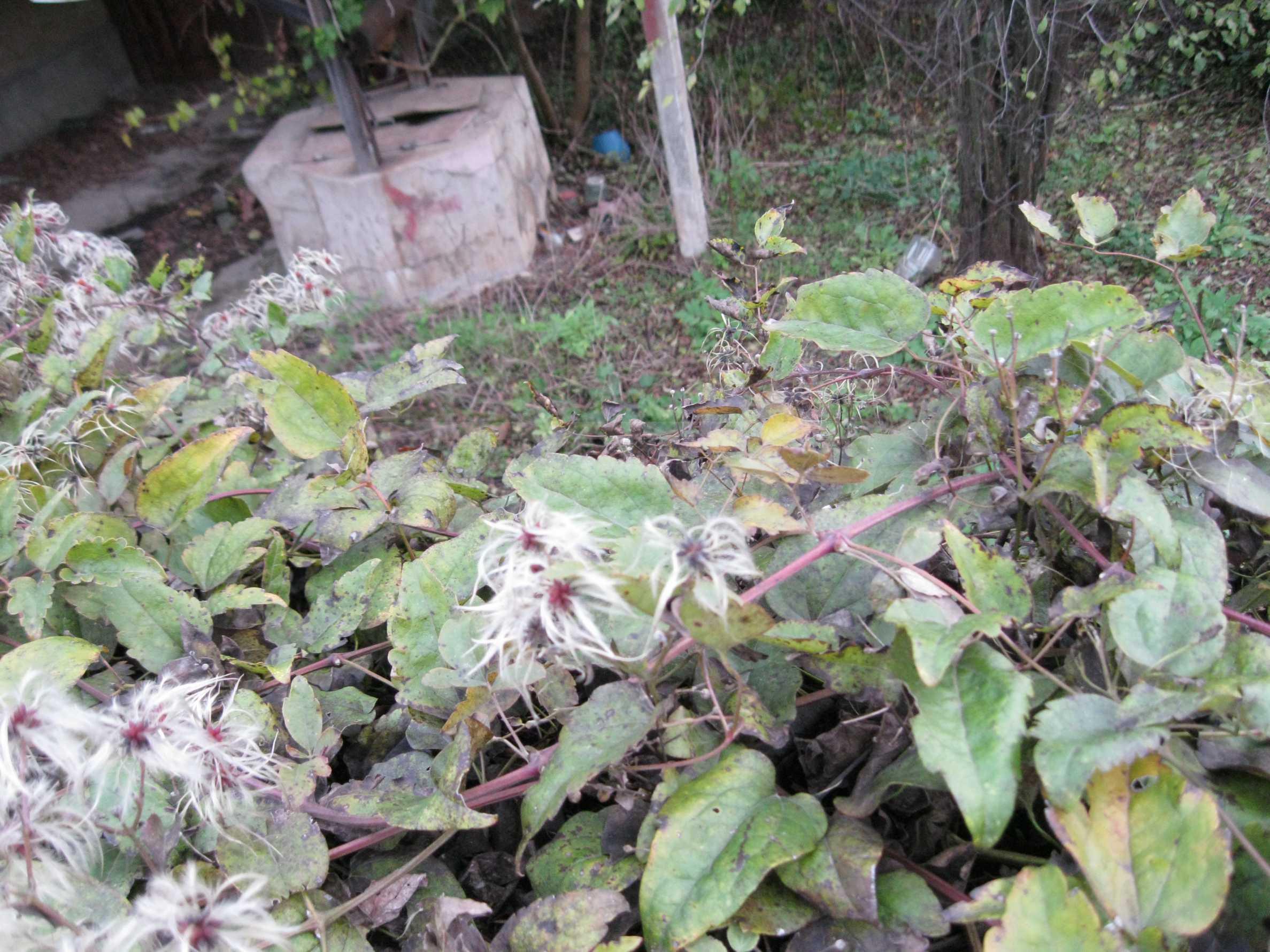 Backsteinhaus in einem Dorf, nur 100 Meter von der Hauptstraße entfernt 4