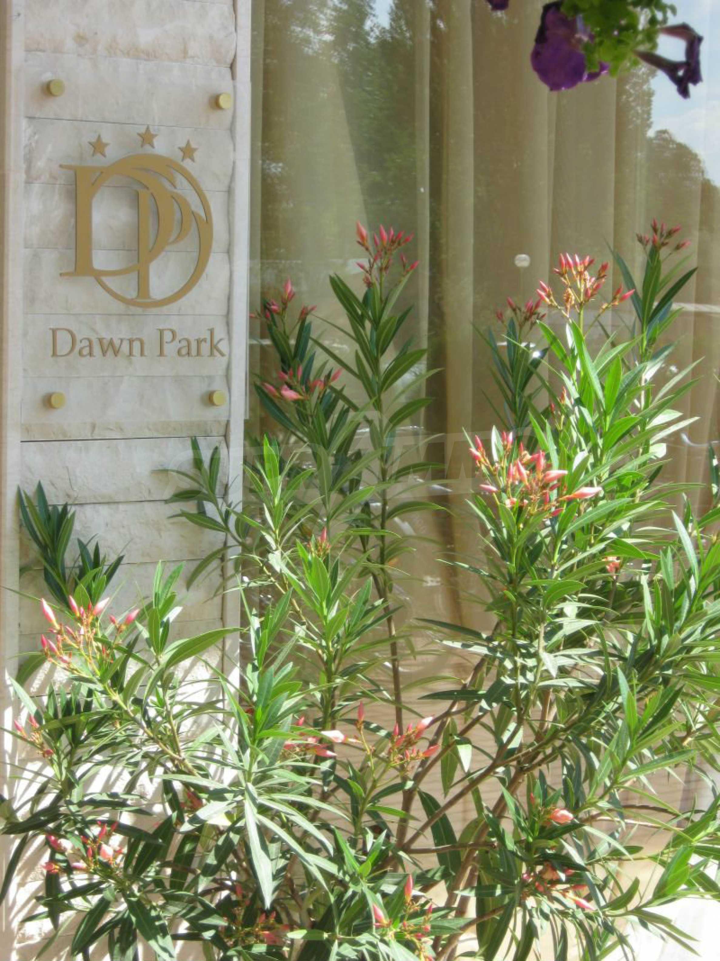 Dawn Park 38