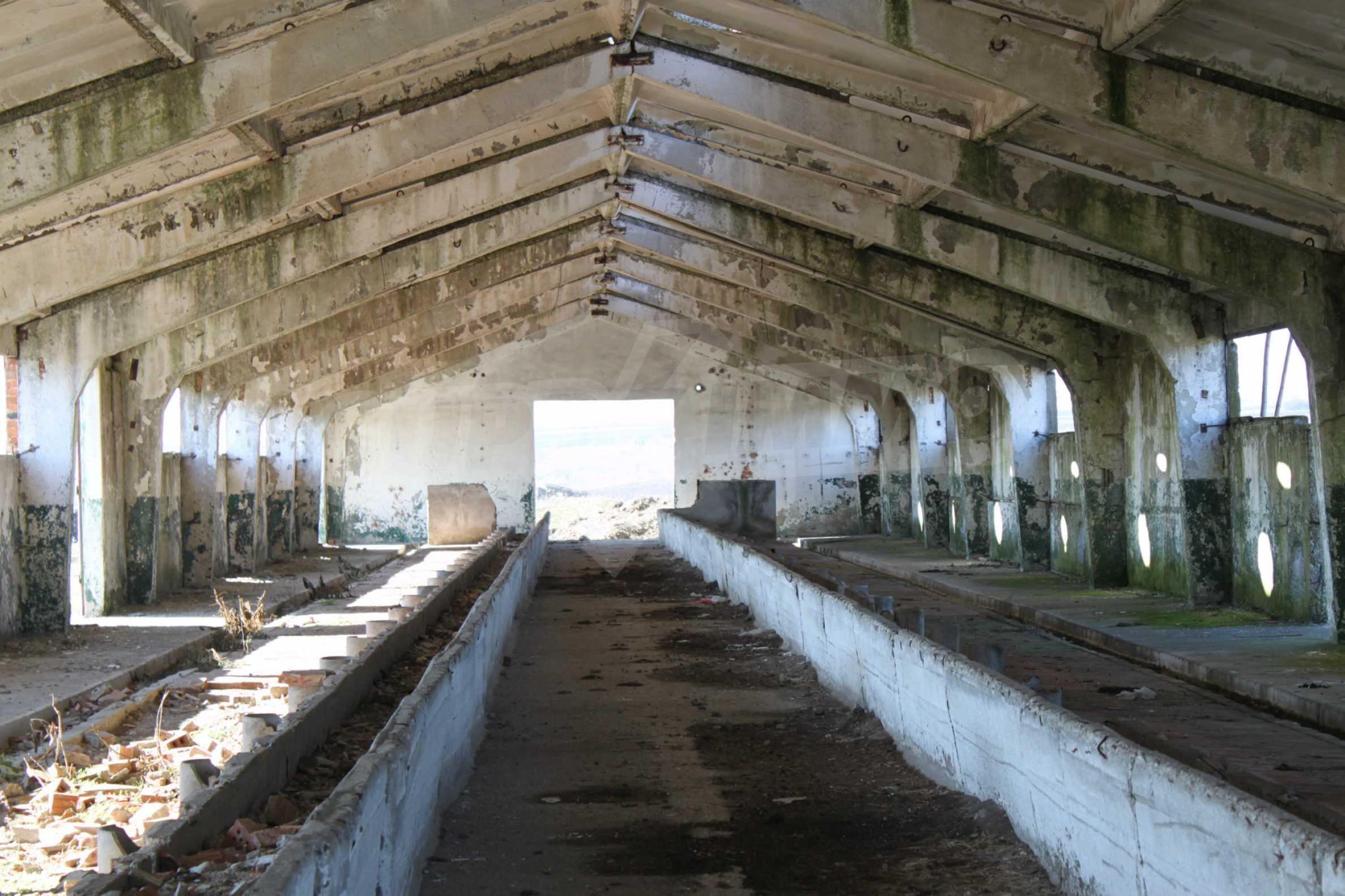 Dairy farm with a huge yard 7