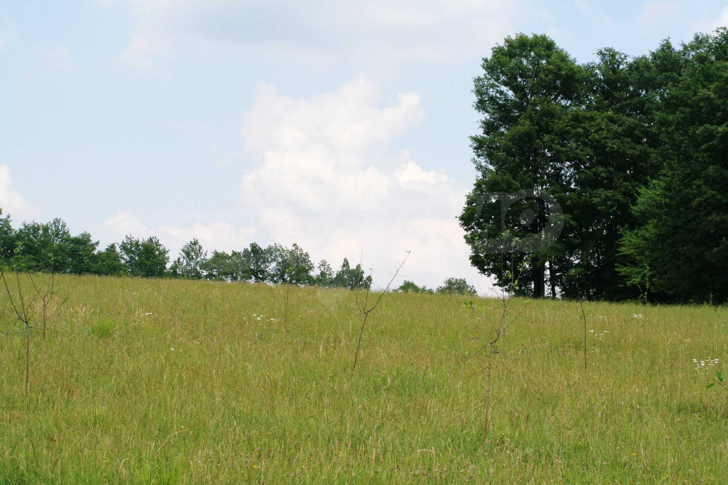 Spacious plot of agricultural land with potential near Gabrovo 8