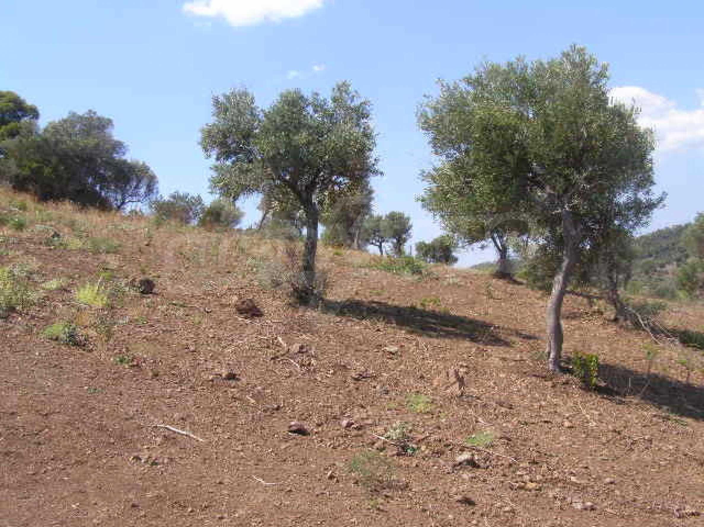 Земеделска земя  в  Палиури 6