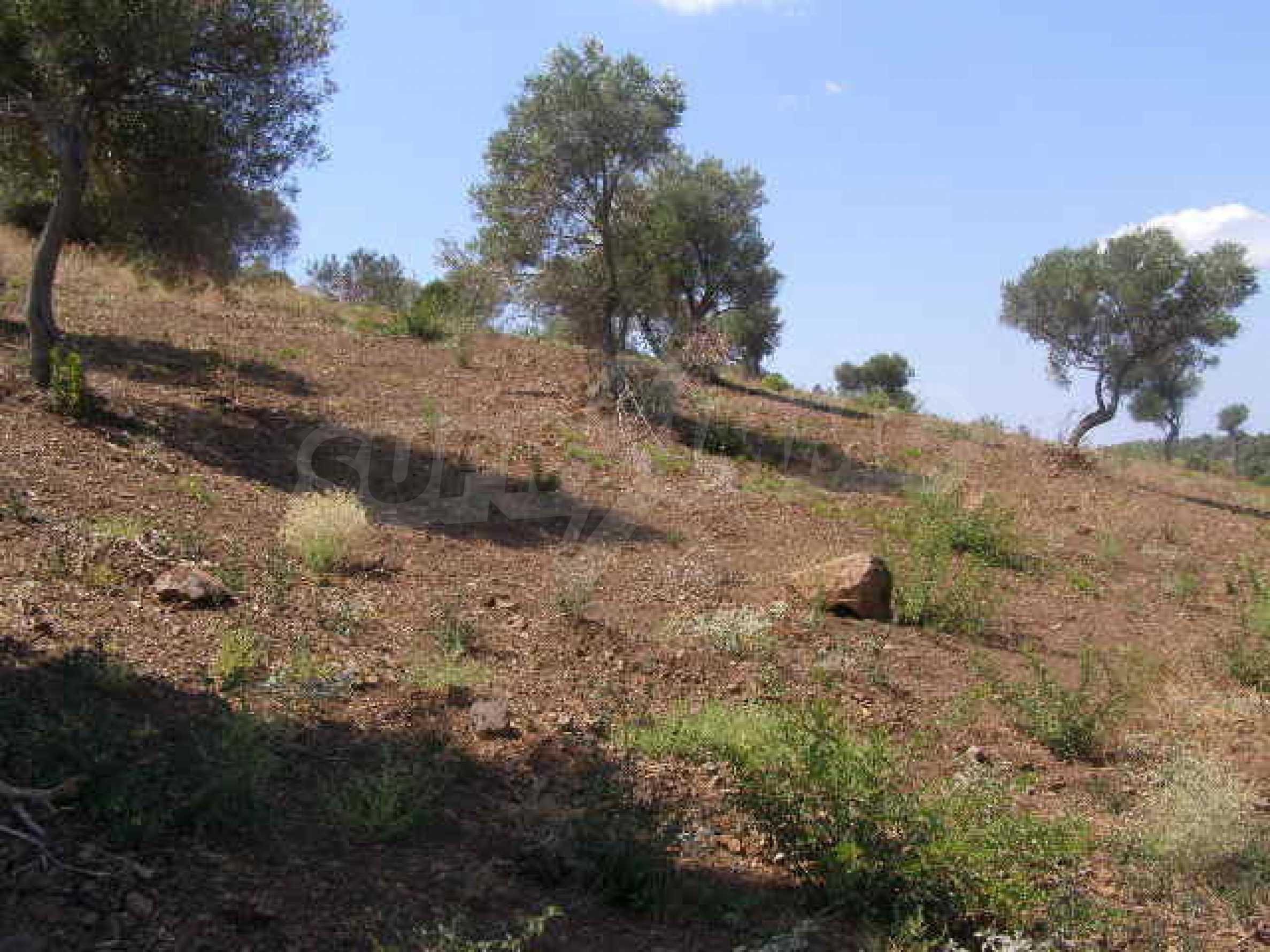 Земеделска земя  в  Палиури 7