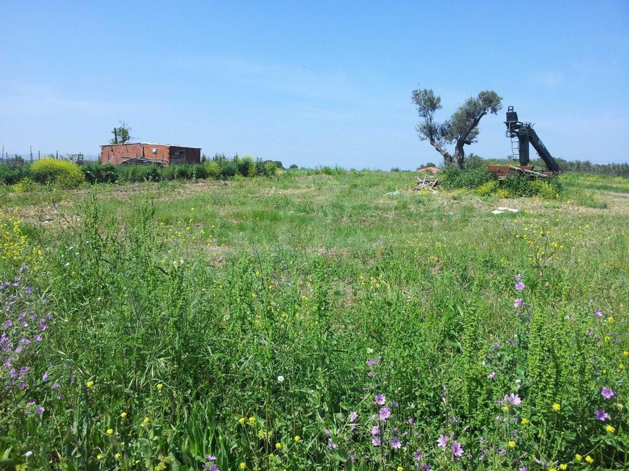 Земеделска земя  в  Афитос 10
