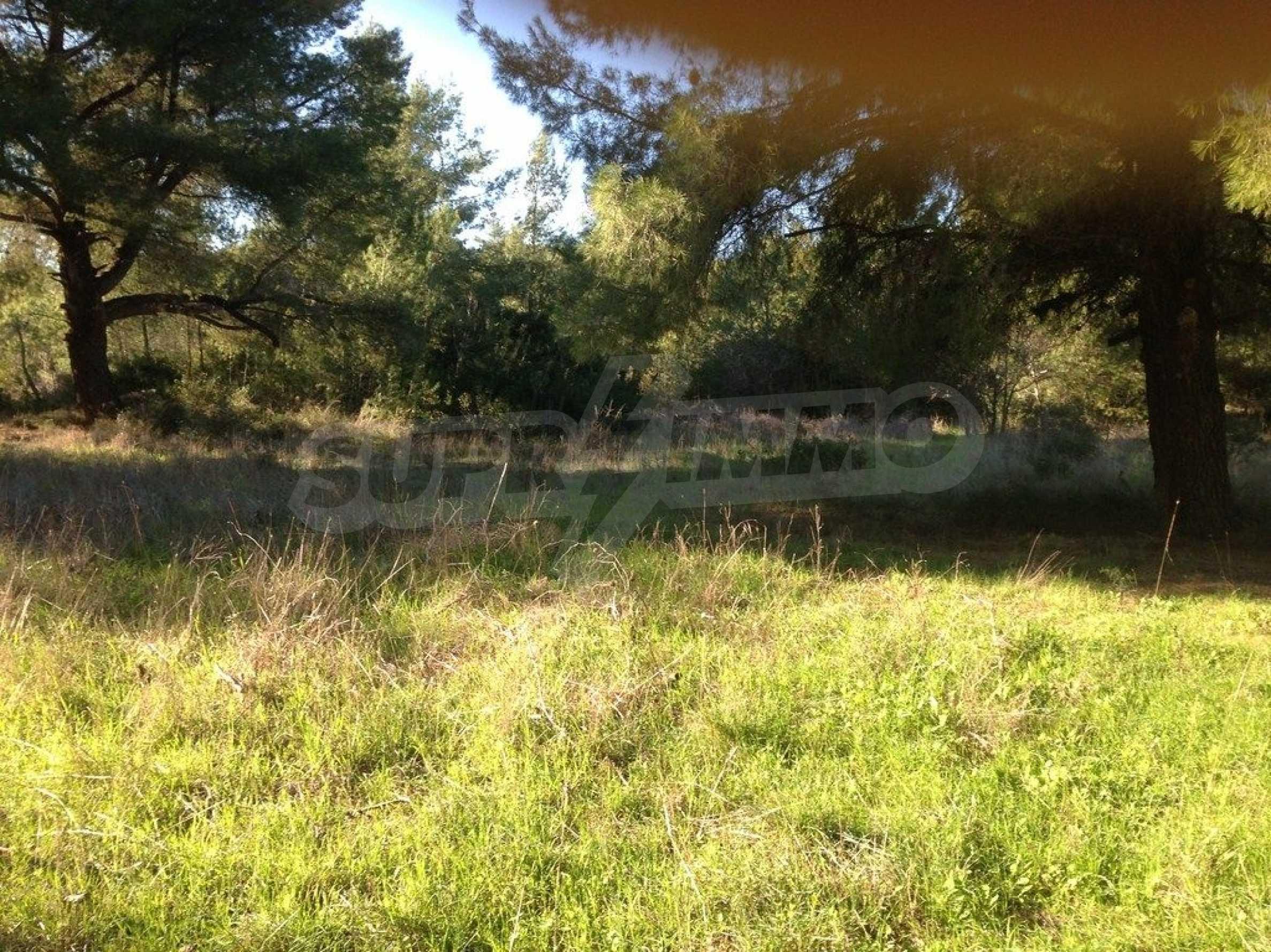 Земеделска земя  в  Пефкохори 7