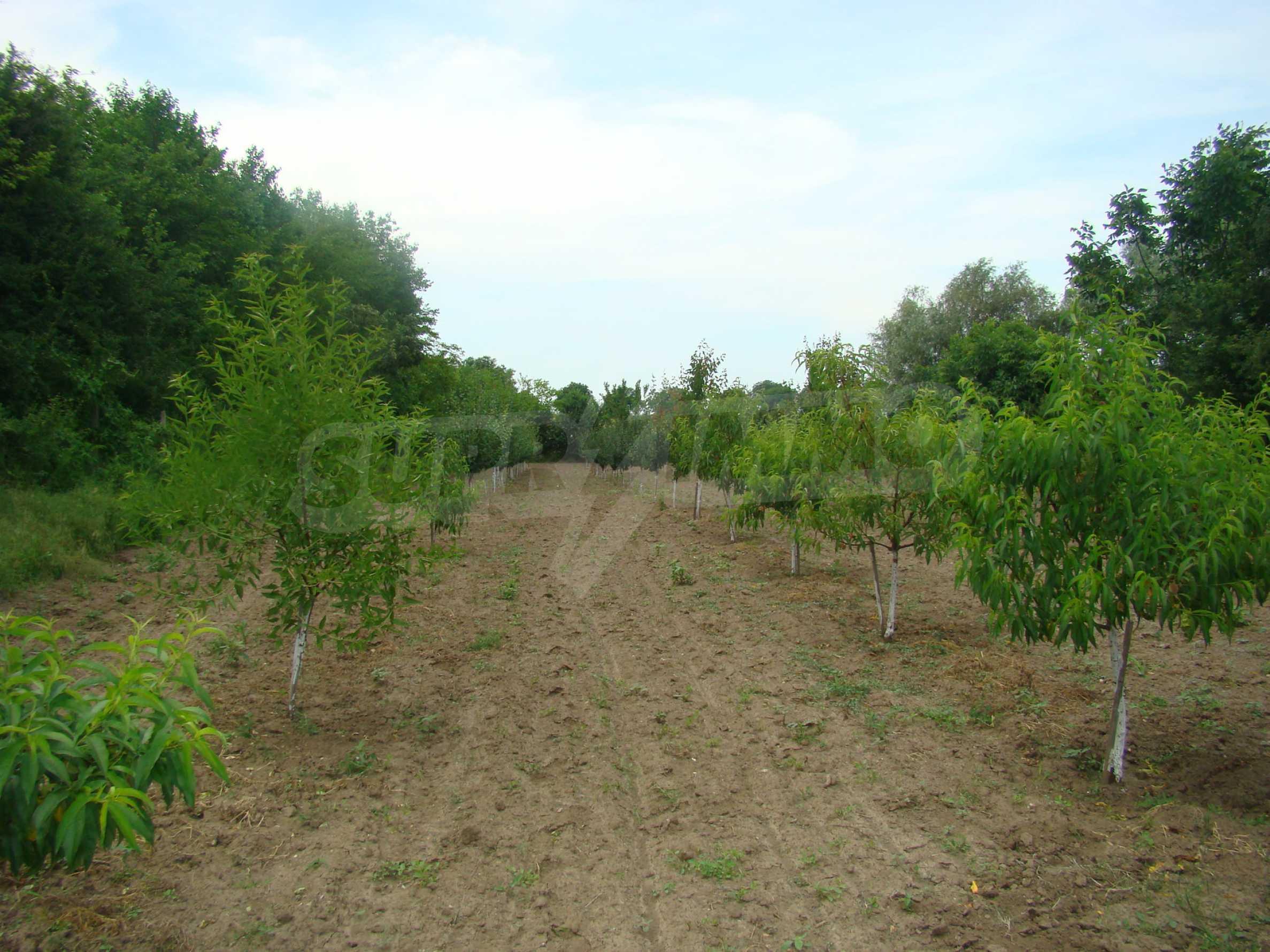 Земеделска земя с голяма овощна градина в близост до Видин 4