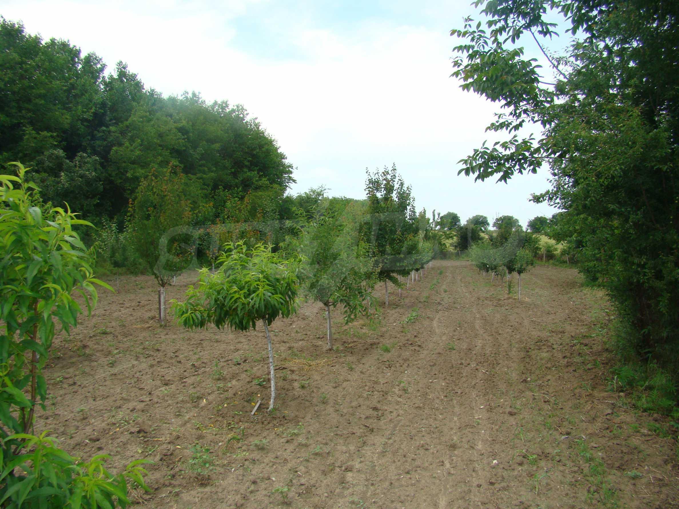 Земеделска земя с голяма овощна градина в близост до Видин 6