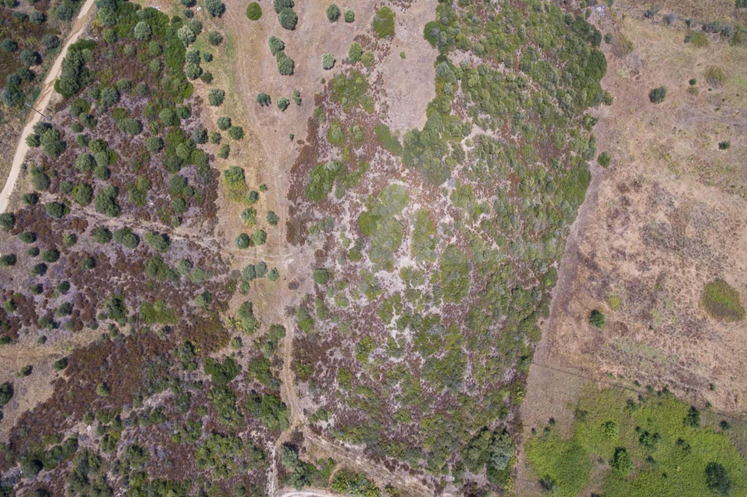 Земеделска земя  в  Остров Амулиани 13