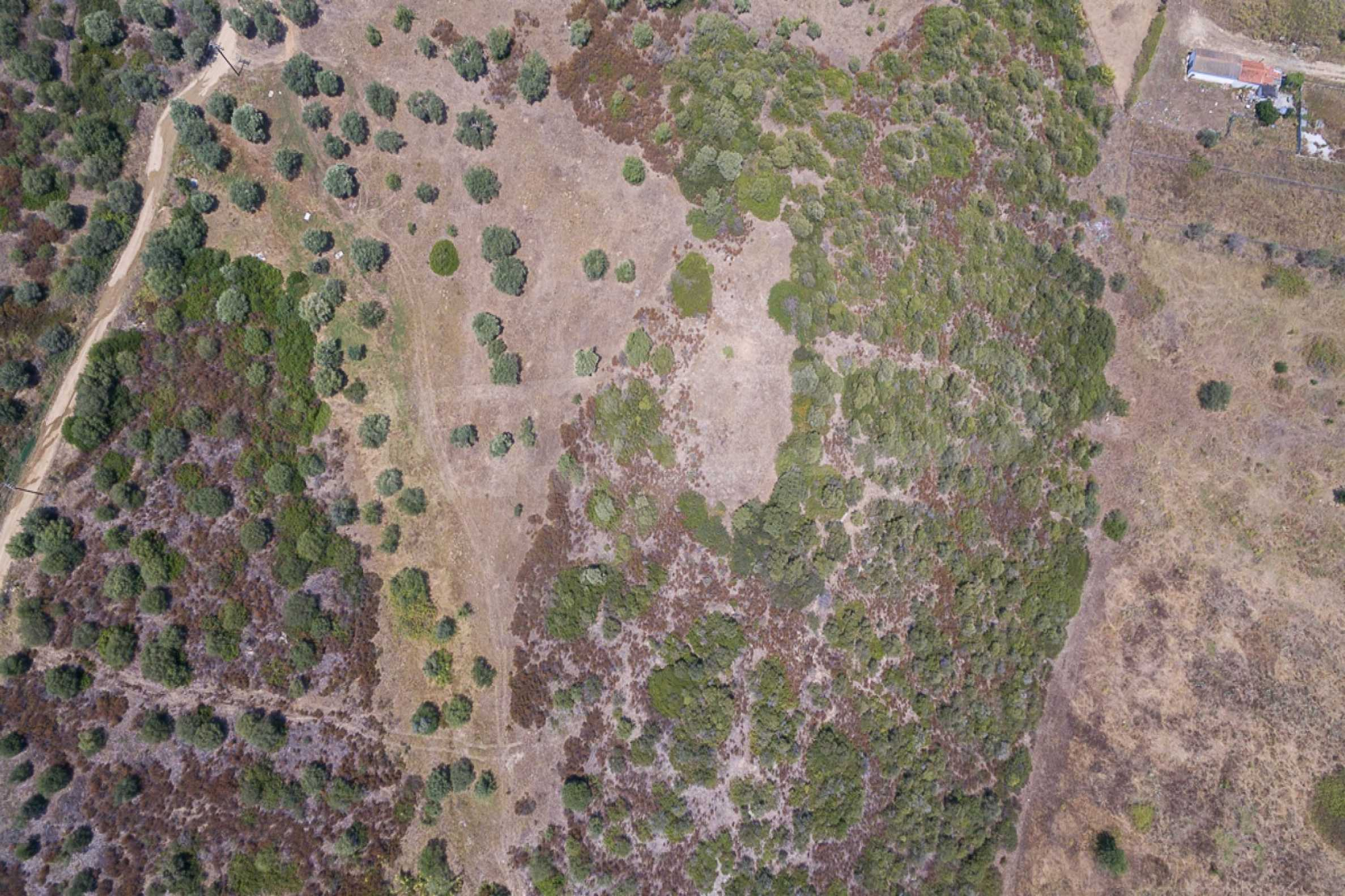 Земеделска земя  в  Остров Амулиани 14