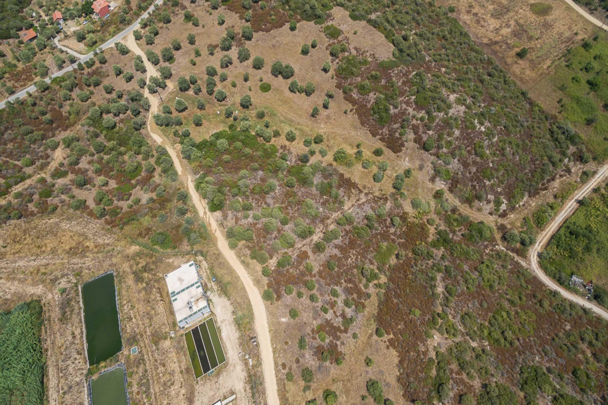 Земеделска земя  в  Остров Амулиани 1