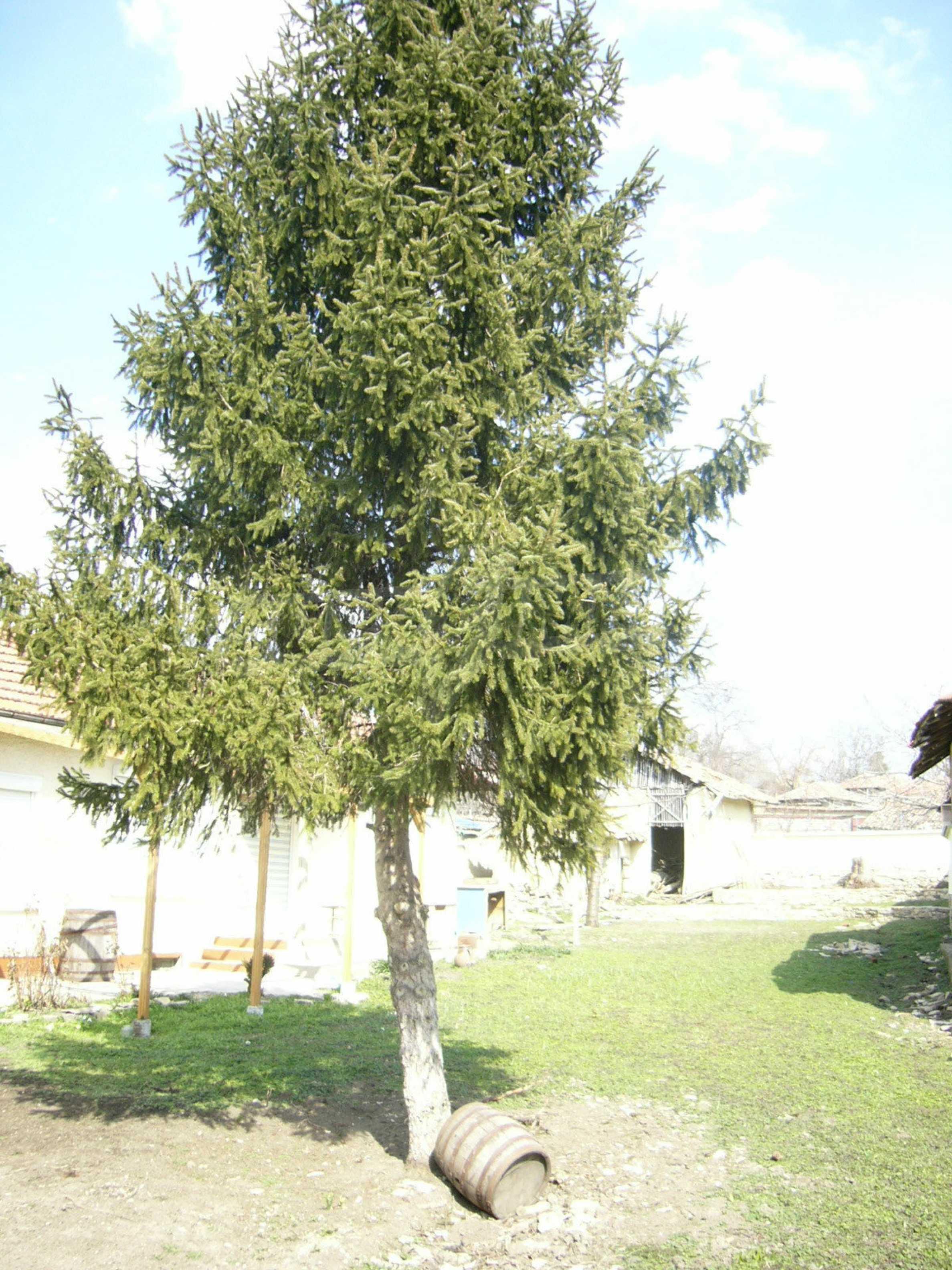 Едноетажна селска къща върху маза на 20 км от Велико Търново  5