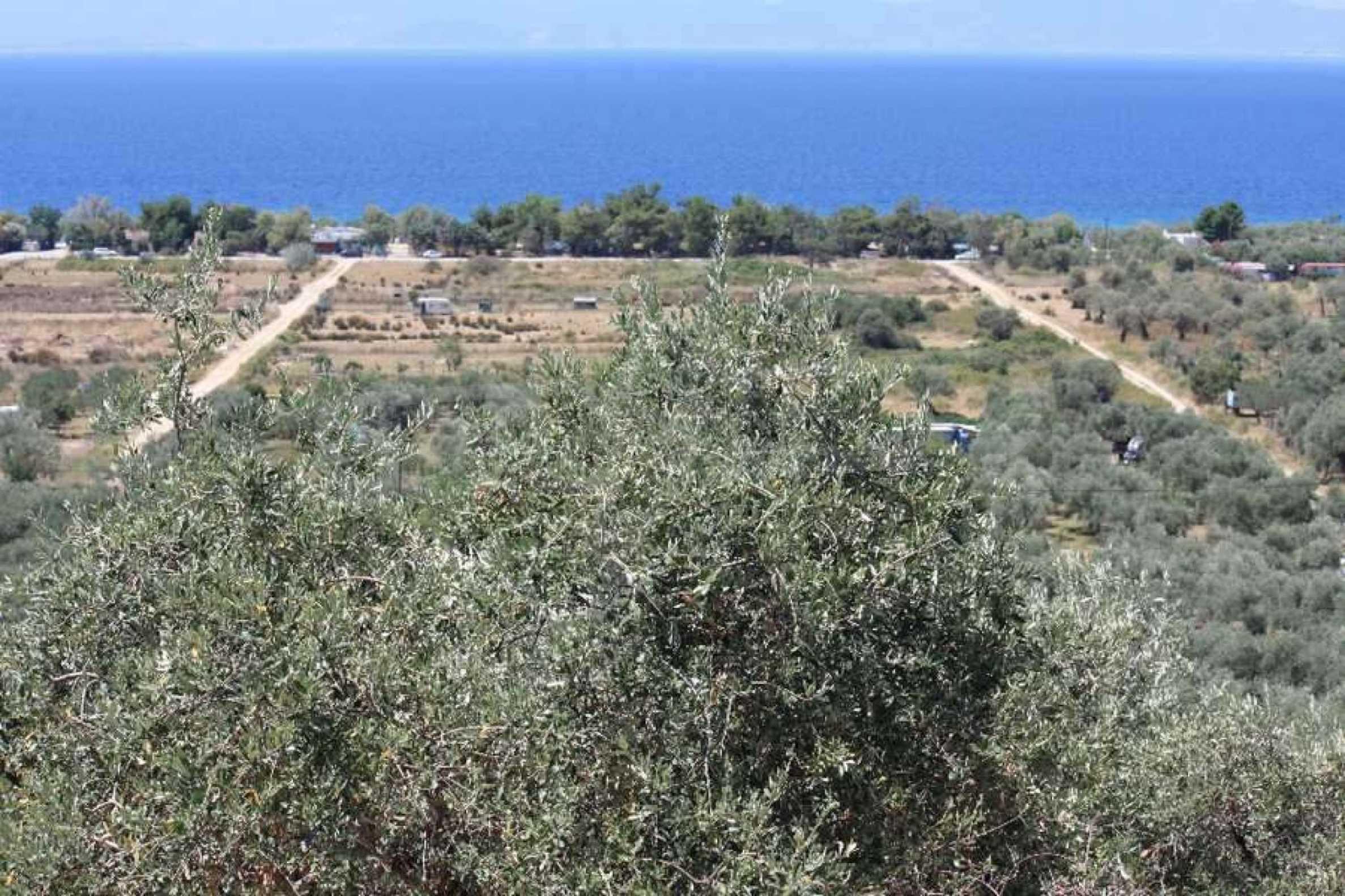 Земеделска земя  в  Skala Sotiros 2