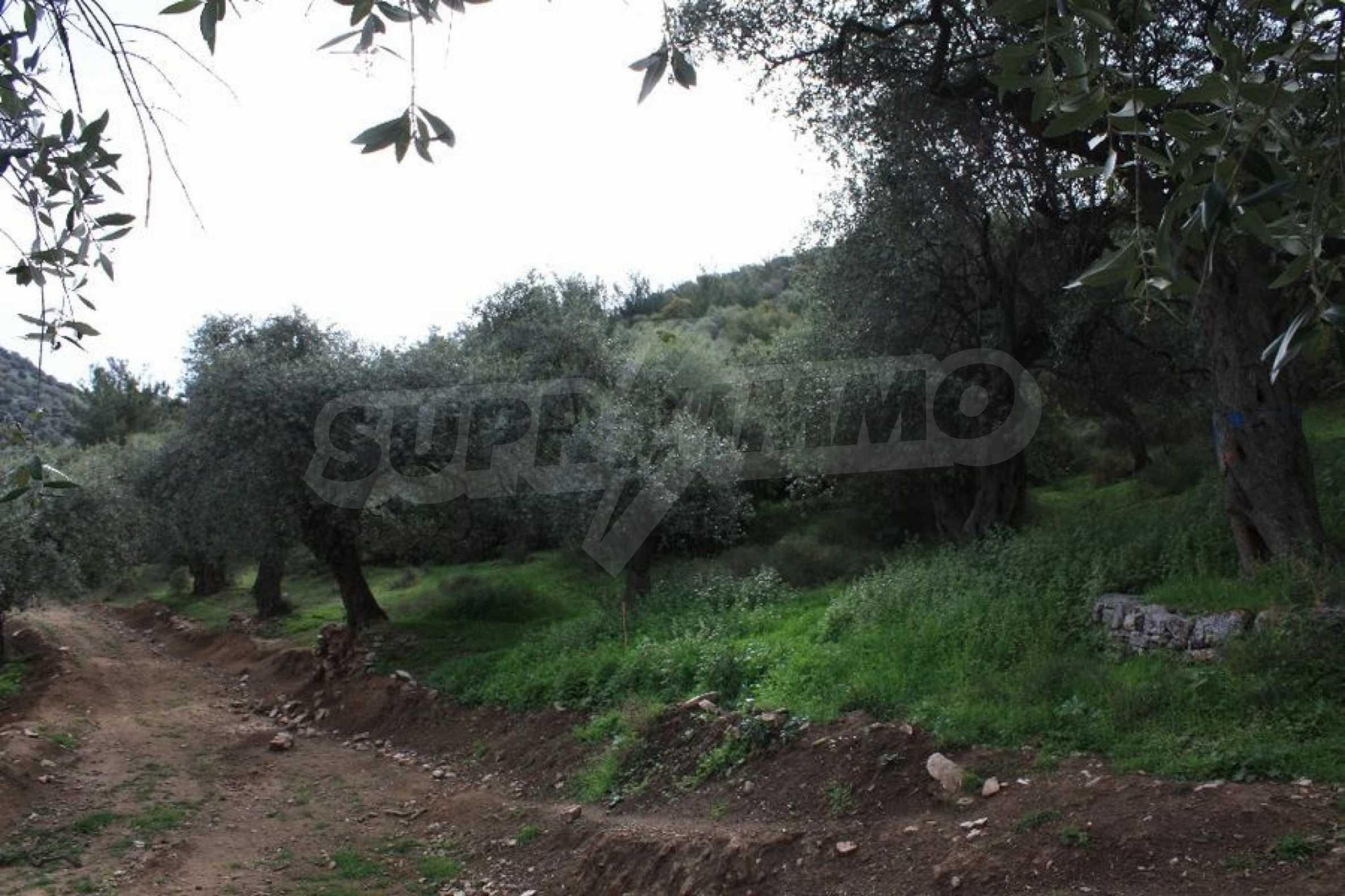 Земеделска земя  в  Skala Sotiros 3
