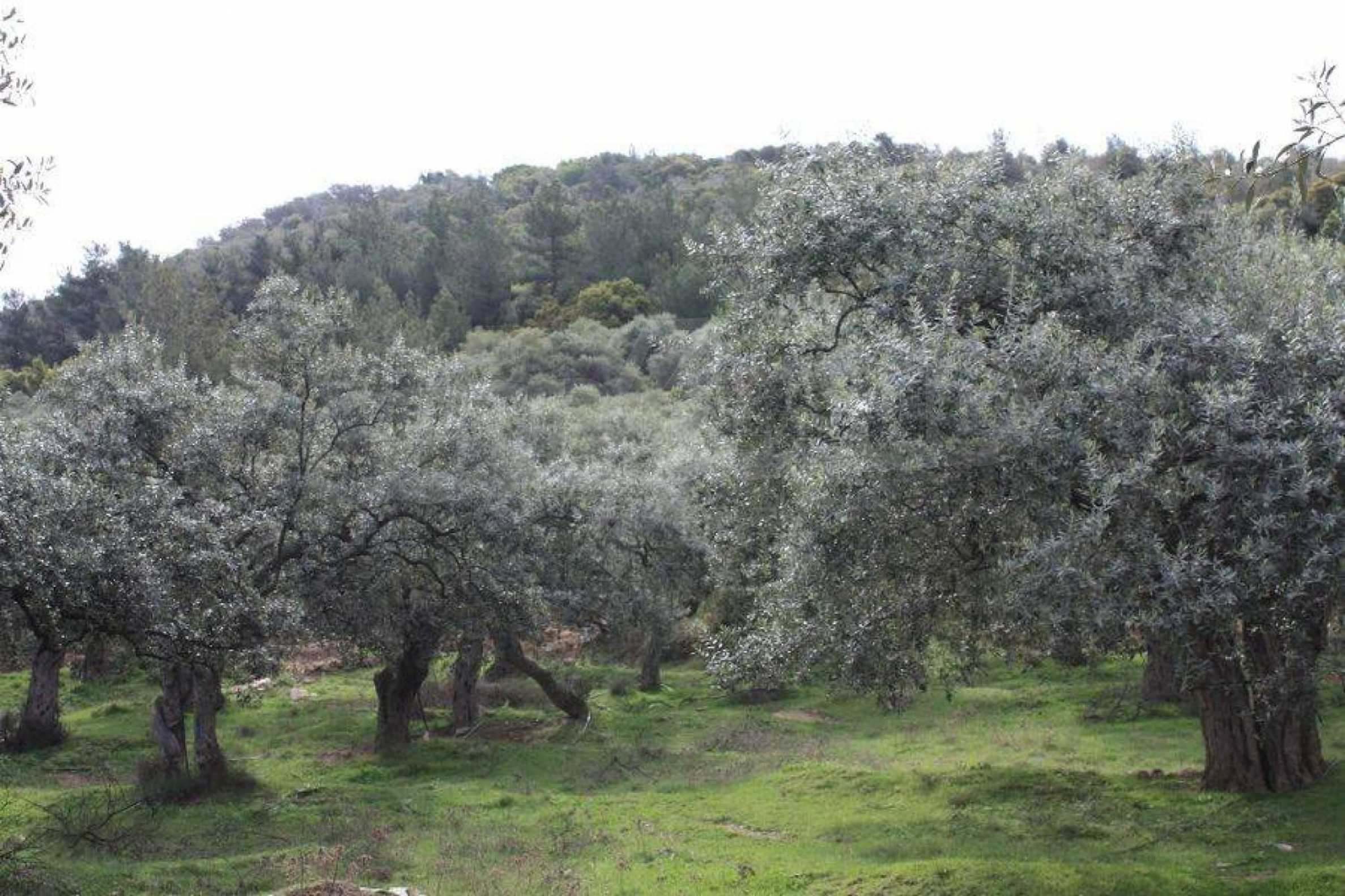 Земеделска земя  в  Skala Sotiros 4