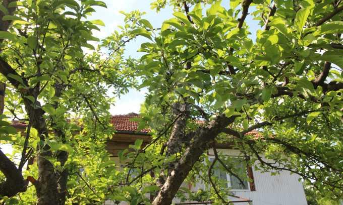 12 km von der Stadt Veliko Tarnovo entferntes renoviertes Haus 49