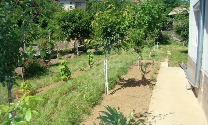 Breites Haus mit Garten in der Nähe von Widin 3