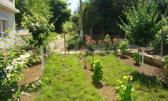 Breites Haus mit Garten in der Nähe von Widin 7