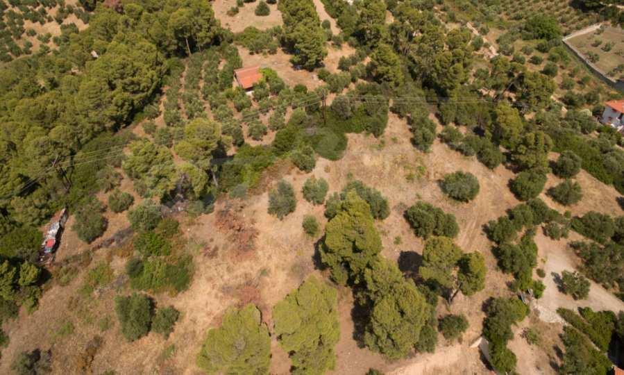 Земеделска земя  в  Неос Мармарас 4