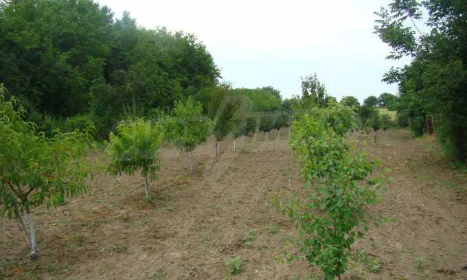 Земеделска земя с голяма овощна градина в близост до Видин 5